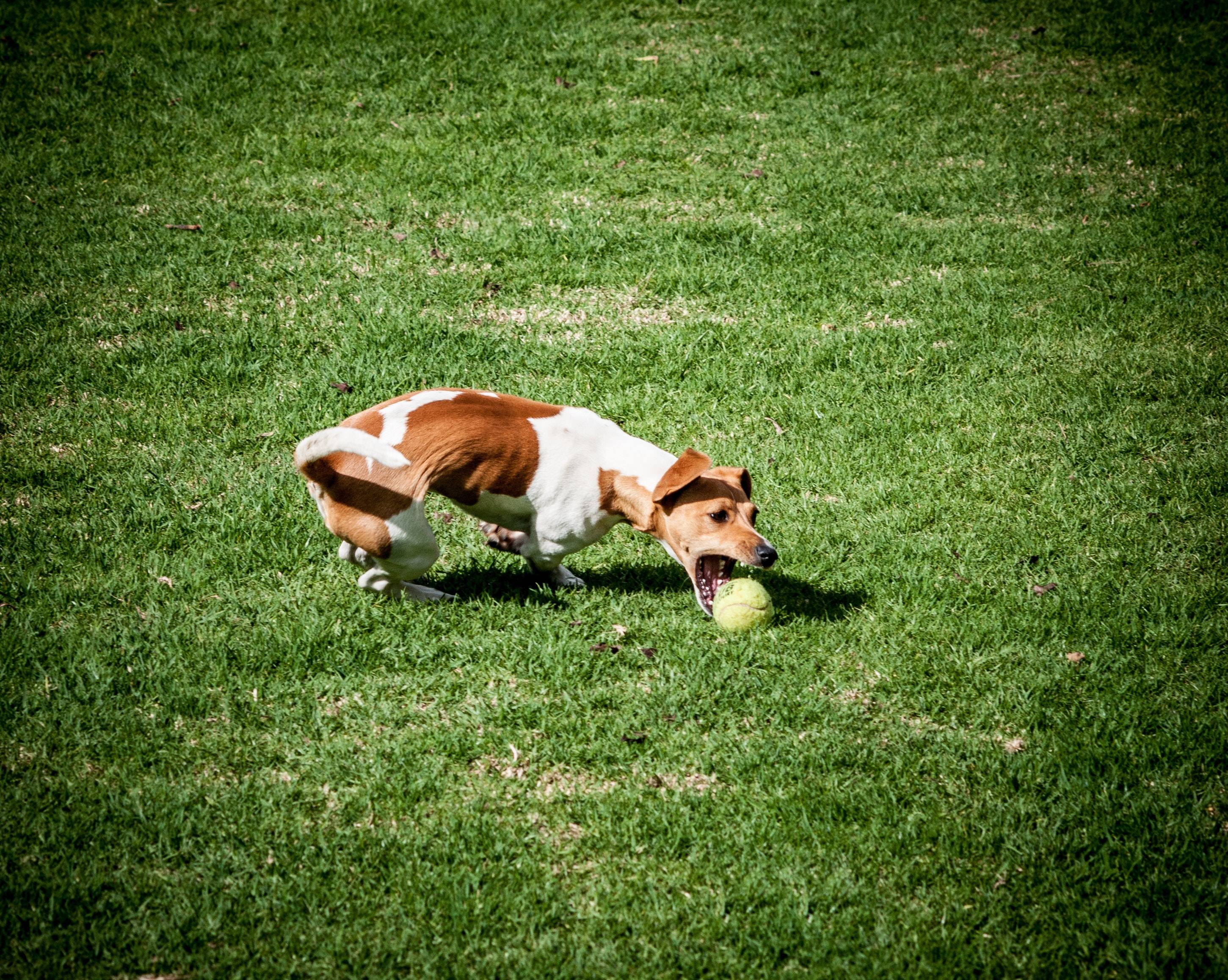 5 Dog Park Tips To Avoid Issues With Other Dogs And Their Owners - Team K9