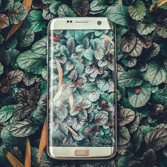 A smart phone laying on a bed of green leaves