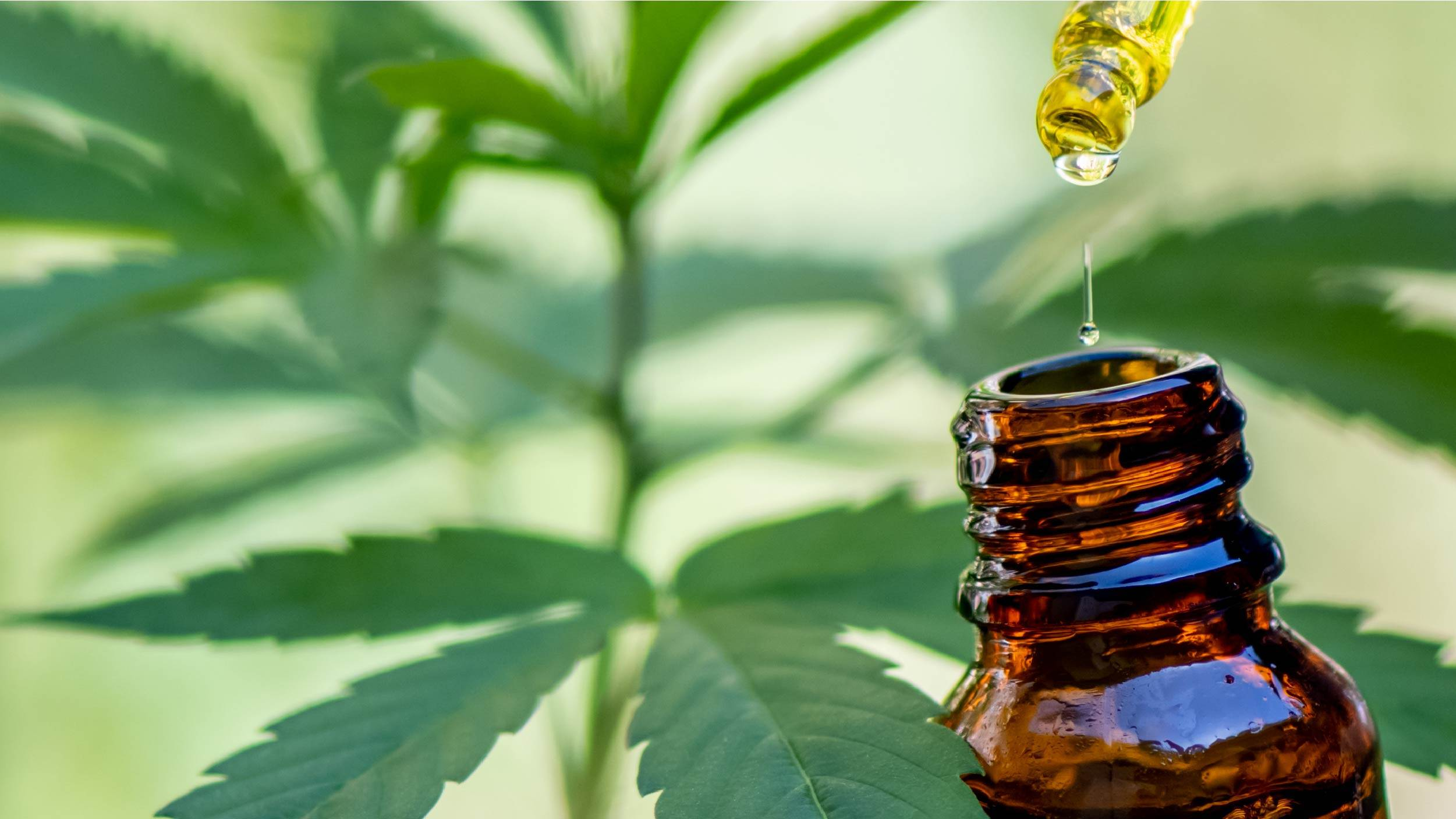what is cbd oil for dogs
