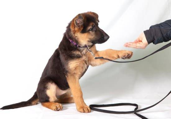 Types Of Dog Training: Find What's Right For You