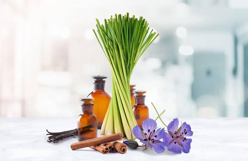 Lemongrass, Vanillin, Cinammon and Geraniol ingredients all together