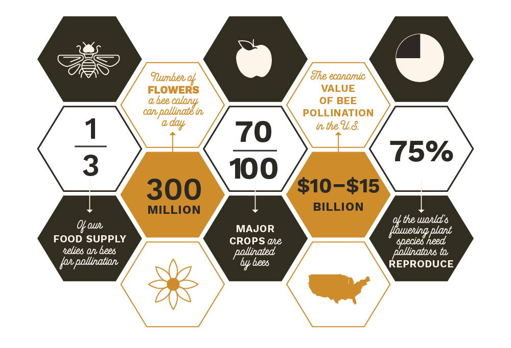 An infographic of pollination statistics