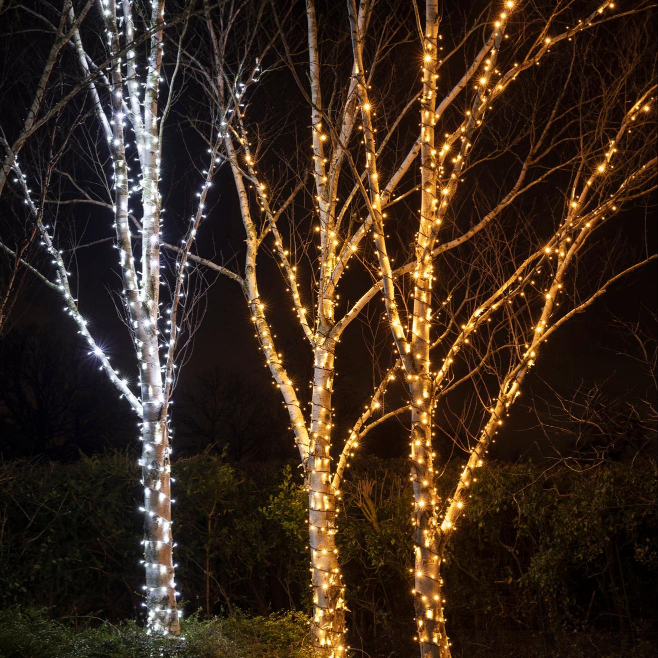 Mit weißen und warmweißen Lichterketten umwickelte Bäume