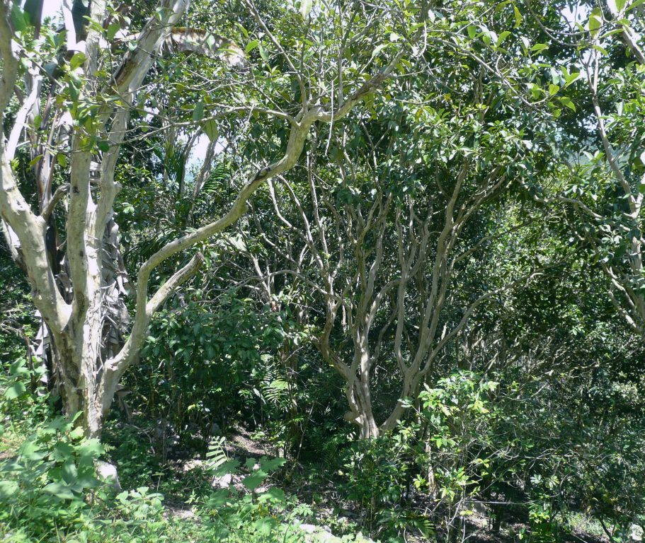 High Quality Organics Express Guatemala Trees