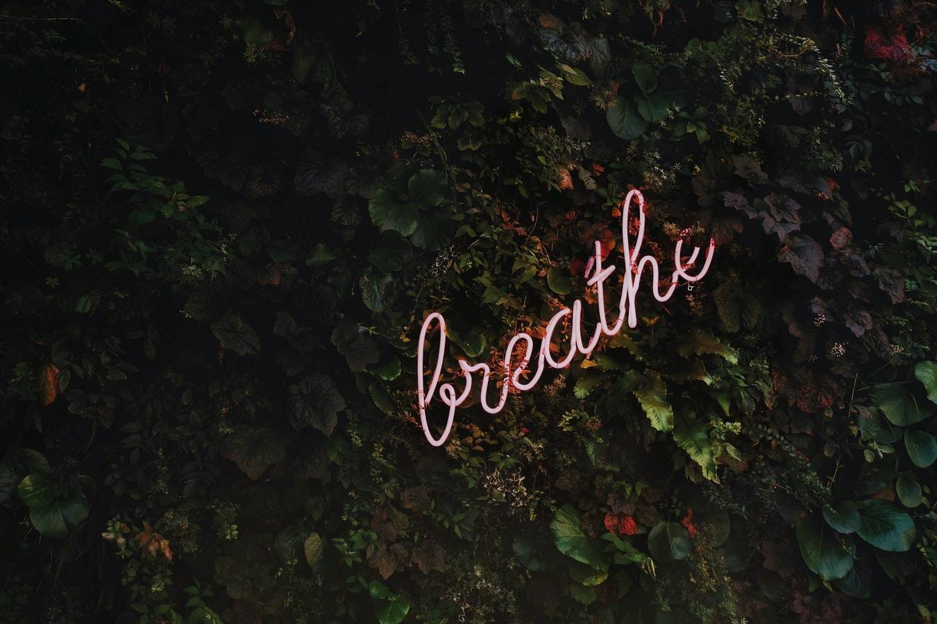 Breath Neon Signage Photo