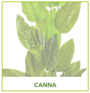 ARTIFICIAL CANNA PLANTS