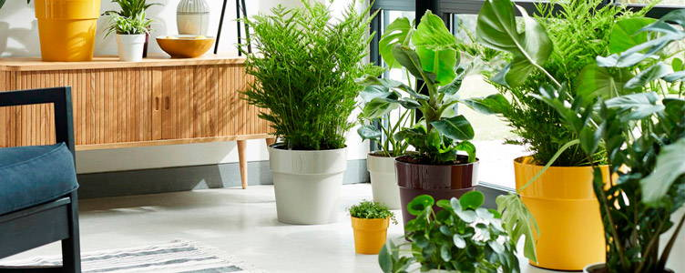 Elho® flower pots in the spotlight