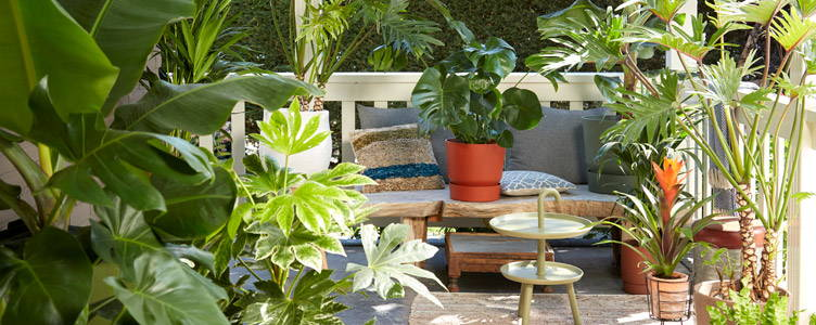 Top 10 Indoor plants for outside